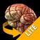 Brain - 3D Atlas of A...